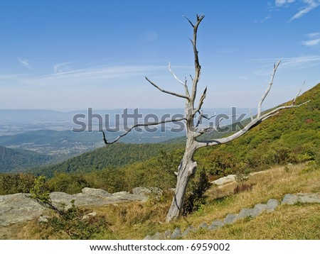 A shapely dead tree frames the scenic view along Skyline Drive at Shenandoah National Park in West Virginia. - stock photo