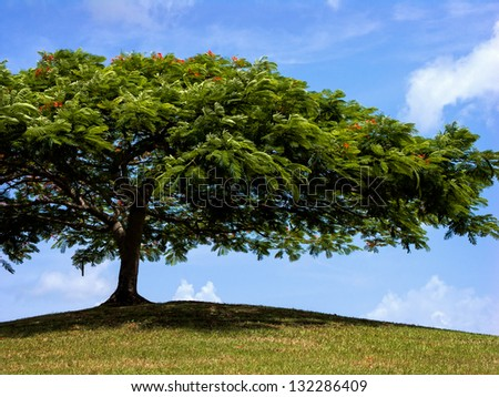 a shapely tree provides shade up on a hill