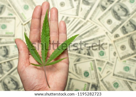 A sheet of marijuana for money, dollars and cannabis, a legal and black market business