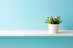 A shelf and a plant