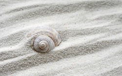 A shells in the sand at the beach. Snail shell. Shells background.