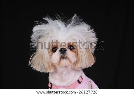 Dog Bad Hair