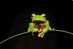 A shiny green tree frog sits on a leaf in the darkness.