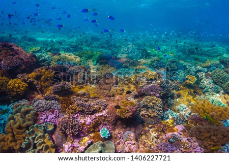 A shot beautiful shot of a crystal clear water and reef #1406227721