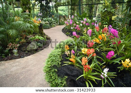 Singapore Orchids Picture on Adisak Orchid In Blooming Orchid Flowers In Find Similar Images
