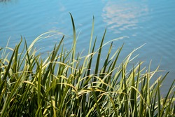 A shot of grass and leaves on the tranquil waterscape background, texture for wallpaper