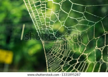 A shot of the an arachnids home #1331895287