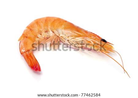 a shrimp on a white background