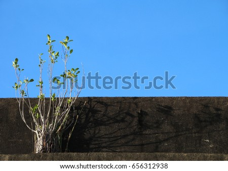 a shrub and a  cement wall under blue sky. sketchy background and texture for design.  #656312938