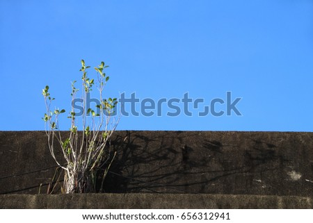 a shrub and a  cement wall under blue sky. sketchy background and texture for design.  #656312941