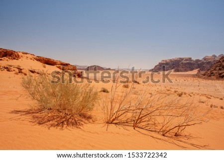 A shrub and a dead shrub in the desert at Wadi Rum, Jordania. #1533722342