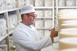 A side profile medium shot of an Inspector checking young farmhouse cheddar cheese wheels in a cellar.