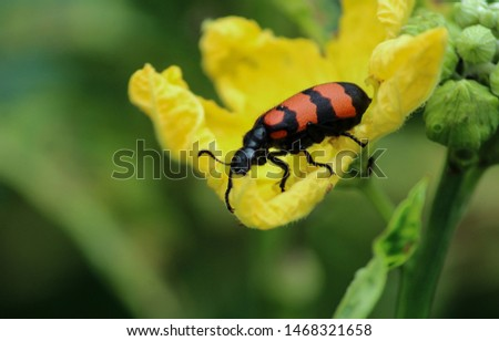 A side profile of insect which have brown and black skin. This picture is taken in the agriculture field.