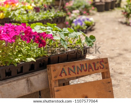 A sign with lettering in a garden center full of blossoming annuals and other plants. #1107577064