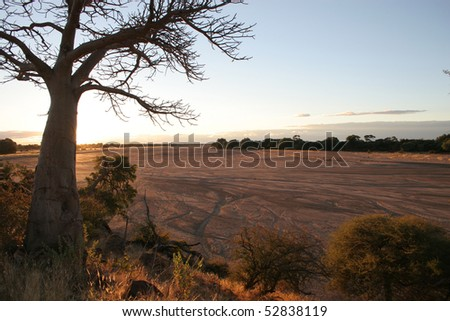 A silhouette of a baobab next to a large dry riverbed