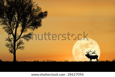 A silhouette of a bull elk