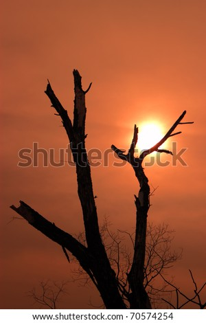A silhouette of a dead tree against the sunset