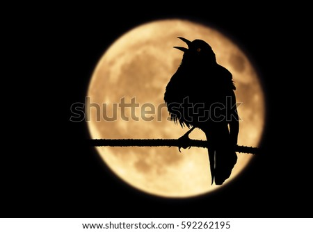 Shutterstock A silhouette of a raven perched on a branch with its beak wide open. The bird, framed by a full moon, shrieks into the moonlit night while emitting a mysterious red glow from its eye.