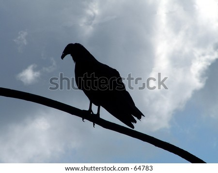 A silhouette of a vulture