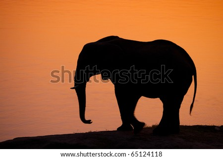 A silhouette of an African elephant at sunset