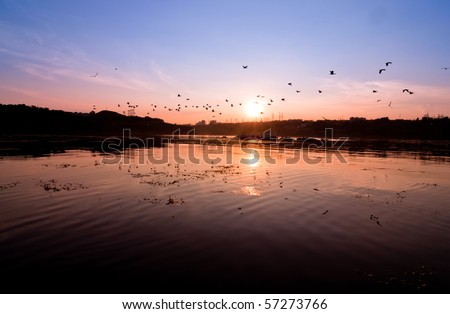 A silhouette of  flying birds  against a beautiful sunset.