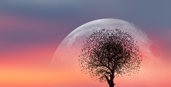 A silhouette of large bird flock with lone dead tree and super moon against amazing sunset
