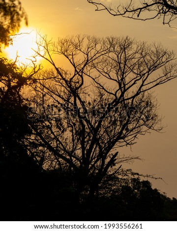 a silhouette of tree during sunset at the wetland, mangrove area