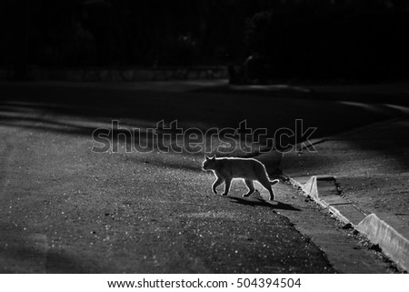 A silhouetted cat crosses the street in the early morning.