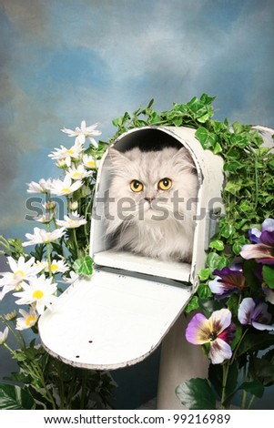 A silky himalayan cat lays inside an open mailbox surrounded by flowers