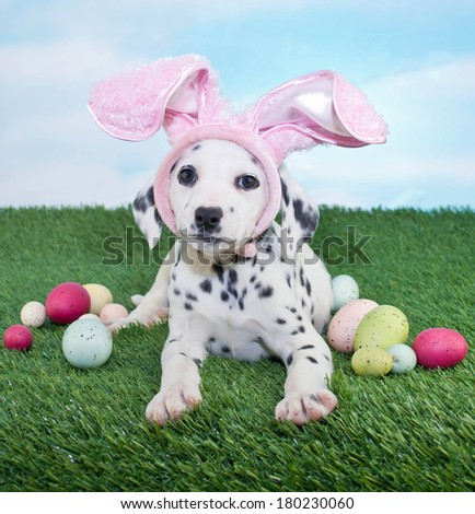 A silly Dalmatian puppy wearing bunny ears laying in the grass with Easter eggs around her.
