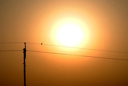 a single alone bird is sitting on a electric wire in the time of sunset in natural light , a silhouette bird photo