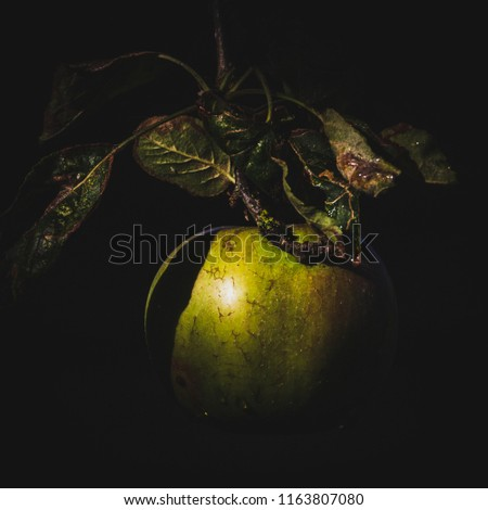 A single apple dangles in a shaft or morning sunlight, lit against a dark black background.  Leaves above the apple compliment the composition.