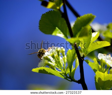 A single Bee Resting on a Flower Petal - stock photo