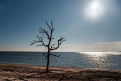 A single death tree by the beach under the glaring  Sun.