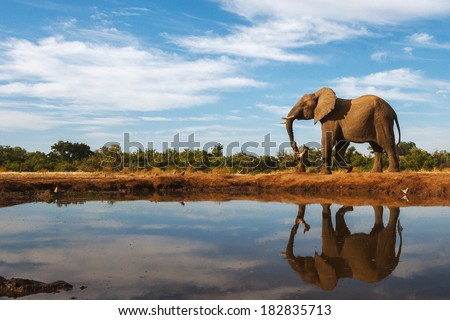 A single elephant is reflected on the still surface of a waterhole on a beautiful day in Botswana #182835713