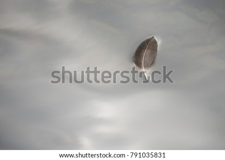 A single feather in the shape of a leaf floats on still water. The water shows the reflection of clouds in the sky.  The background is a grayish blue. The feather is grey and black. #791035831