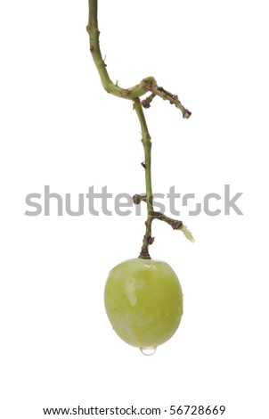 A single green grape with water droplets left on the grape stem.