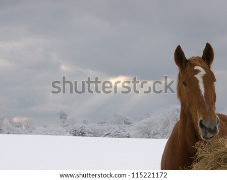 A single horse eats hay in a paddock after a snow fall.