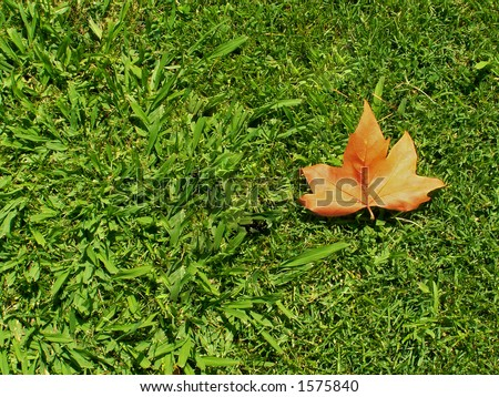 stock photo : A single leaf fallen on grass