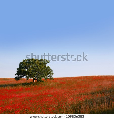 A single oak tree in the middle of a red flowering meadow.