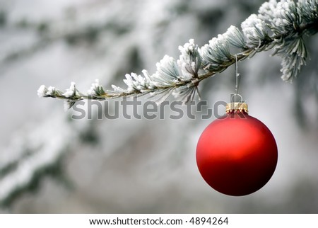 A single red ornament hangs from a frosted pine tree. Copypace for your message