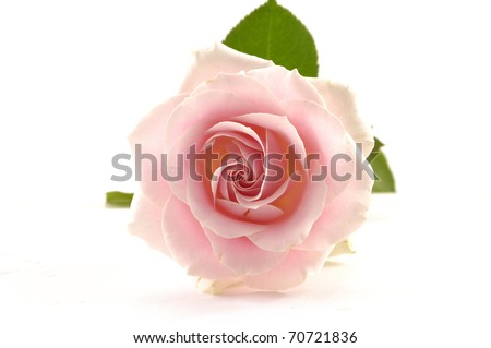 A single romantic pink rose