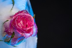 A single rose frozen in a big ice cube on black background