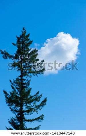 A single tall tree with a single cloud.