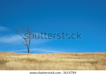 A single tree in a field of grass against a blue sky.  There are wisps of cloud in the sky.