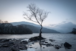 A single tree on the shores of Llyn Padarn, Snowdonia, Wales