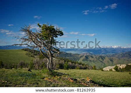 A single tree stands above a Rocky Mountain top.