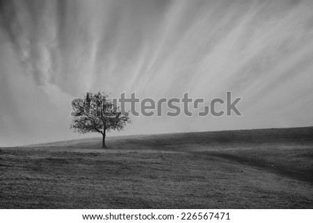 A single weathered tree stands without leaves on a meadow ridge, black and white landscape with alone tree