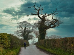 A single woman walker in walking gear on a wet country lane between hedgerows, one recently cut. Taken in Cheshire, UK on a grey, overcast morning in winter.