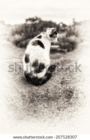 A sitting mixed-breed cat prowling on a rock. Black and white fine art outdoors portrait of domestic cat.